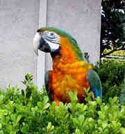 Adorable and affectionate Catalina Macaw parrots for adoption
