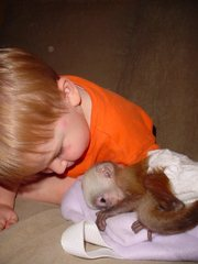 Talented Baby Capuchin Monkey For Adoption!!!!!